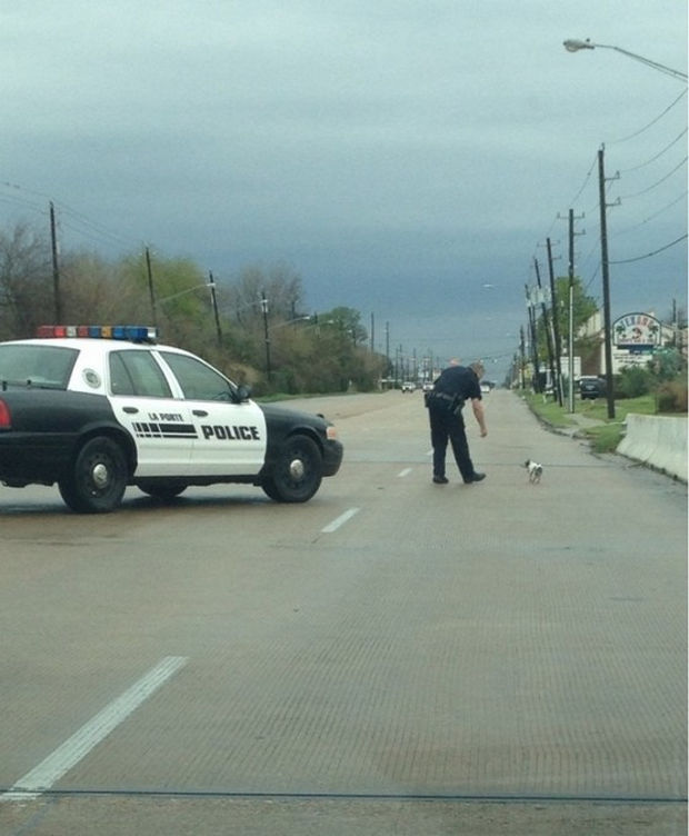 16 Heartwarming Pictures That Will Warm Your Heart - A police officer stops to help a limping dog get across the road safely.