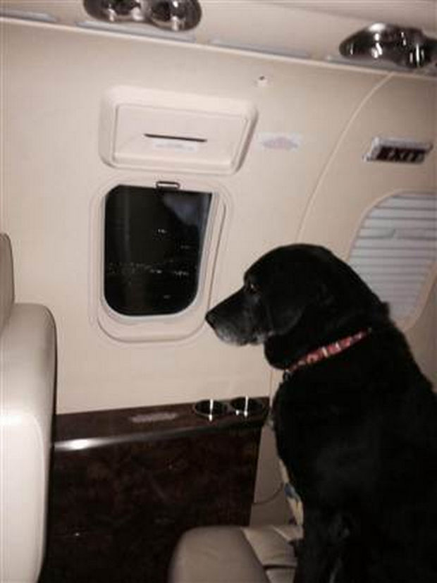 Not only did Helen Rich adopt Lady, but sent a private jet to whisk her away to her new home in Florida.