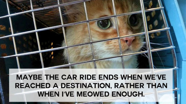 18 things cats would say - Maybe the car ride ends when we've reached a destination, rather than when I've meowed enough.