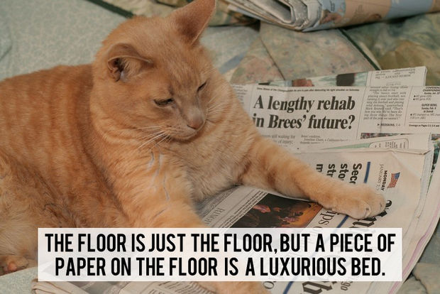 18 things cats would say - The floor is just the floor, but a piece of paper on the floor is a luxurious bed.