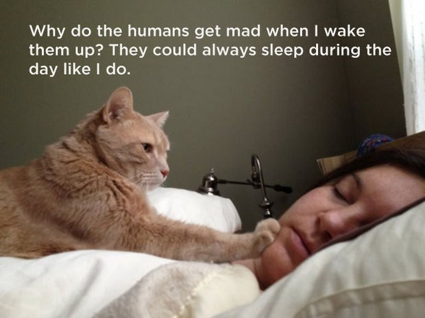 18 things cats would say - Why do the humans get mad when I wake them up? They could always sleep during the day like I do.