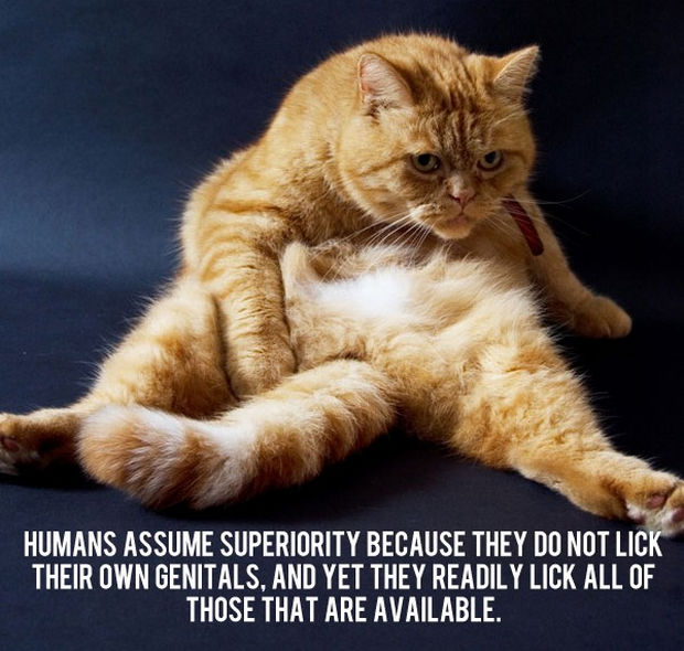 18 things cats would say - Humans assume superiority because they do not lick their own genitals, and yet they readily lick all those that are available.