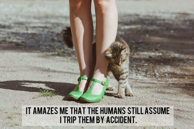 18 things cats would say - It amazes me that the humans still assume I trip them by accident.