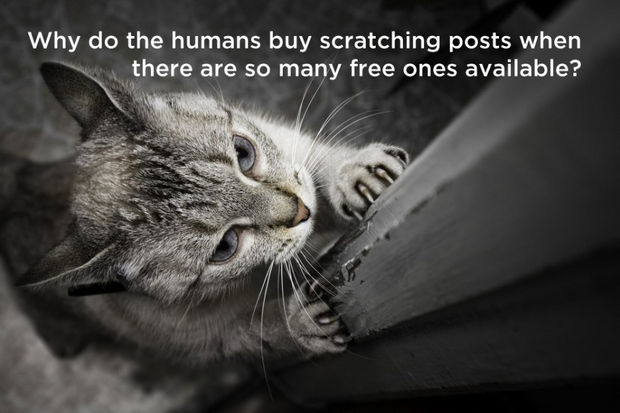 18 things cats would say - Why do the humans buy scratching posts when there are so many free ones available?
