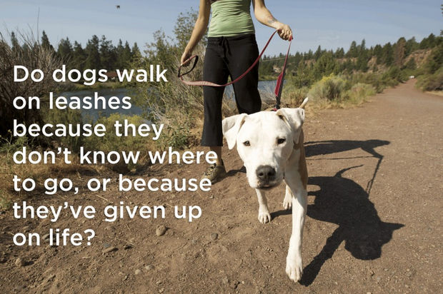 18 things cats would say - Do dogs walk on leashes because they don't know where to go, or because they've given up on life?
