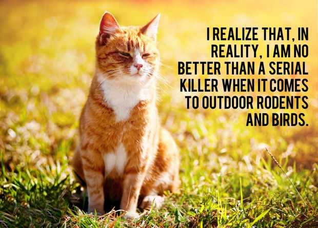 18 things cats would say - I realize that, in reality, I am no better than a serial killer when it comes to outdoor rodents and birds.