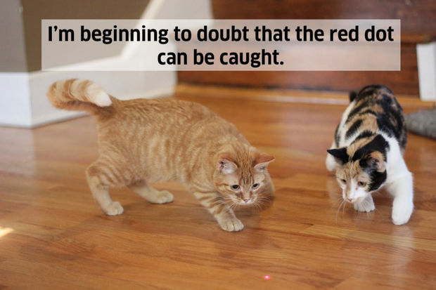 18 things cats would say - I'm beginning to doubt that the red dot can be caught.