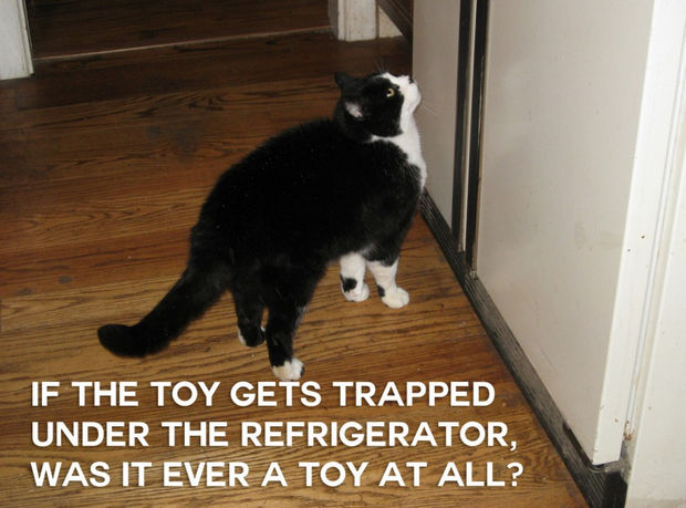 18 things cats would say - If the toy gets trapped under the refrigerator, was it ever a toy at all?