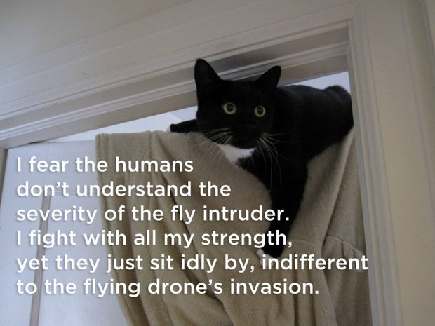 18 things cats would say - I fear the humans don't understand the severity of the fly intruder. I fight with all my strenght, yet they just sit idly by, indifferent to the flying drone's invasion.