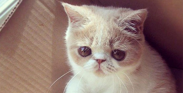 If cats could talk, here are 18 things they would say