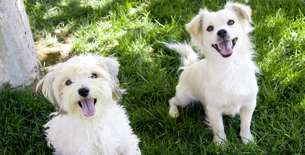 Two Dogs in Los Angeles Get Rescued and Their Friendship Will Melt Your Heart