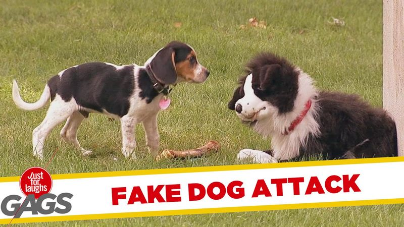 Watch a Stuffed Dog Attack Real Dogs. This Is Not a Misprint. LOL!