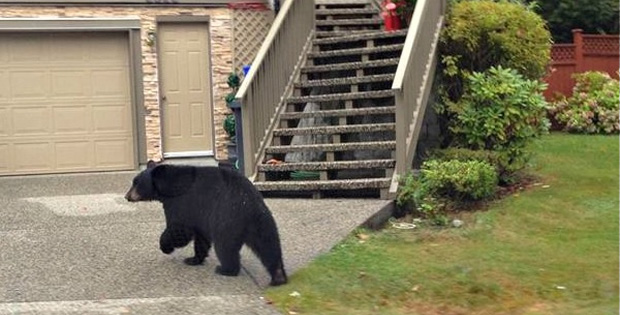 Mailman Doesn't Deliver Package Because of a 'Bear at Door'. That's a Good Reason.