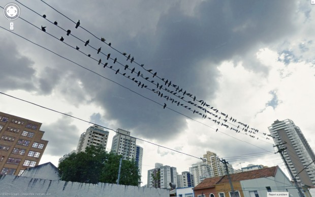 14 funny Google Street View images - Birds that perch on a wire together stay together.