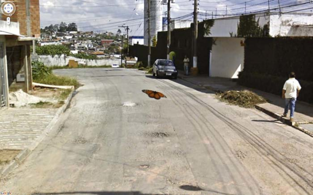 14 funny Google Street View images - Butterfly in flight.