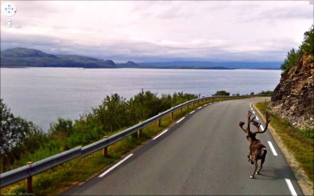 14 funny Google Street View images - Caribou on the run on the highway.