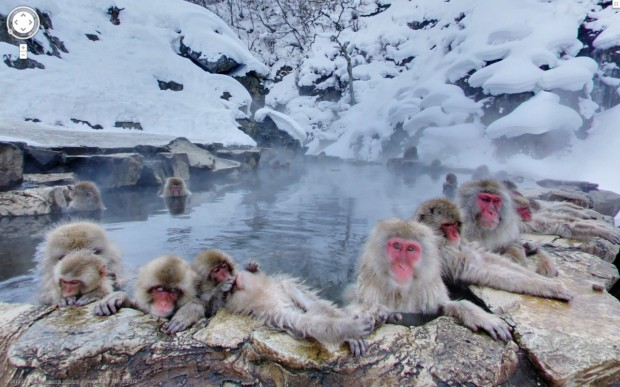 14 funny Google Street View images - Japanese macaques monkeys enjoying a nice dip in hot springs.