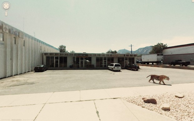 14 funny Google Street View images - OMG, a tiger just roaming around on a parking lot.