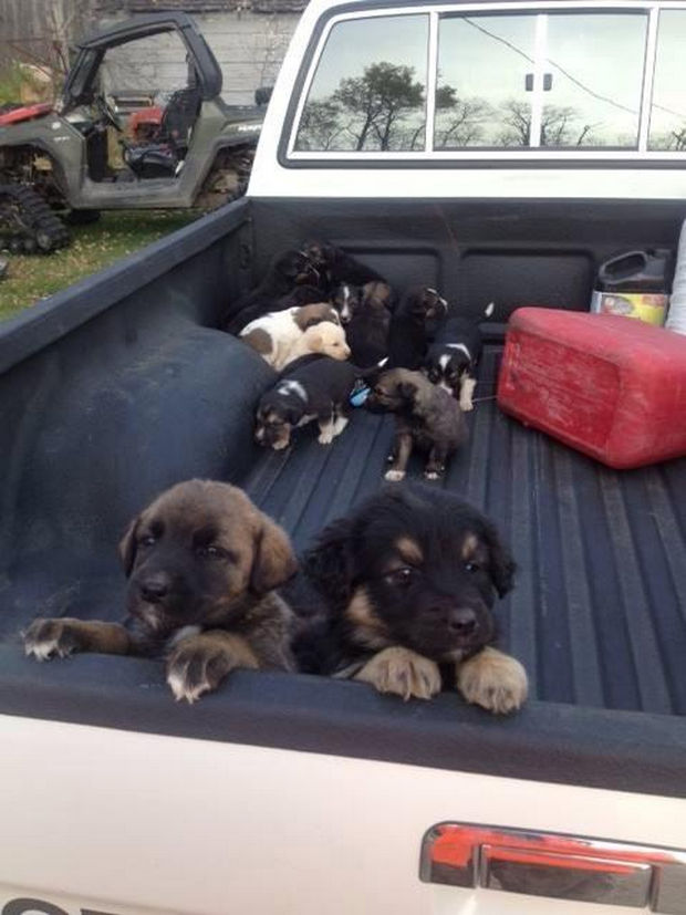 Hunter Finds Puppies in a Field - Twenty beautiful puppies saved by local hunter, Greg Zubiak, near Glaslyn, Saskatchewan in Canada.