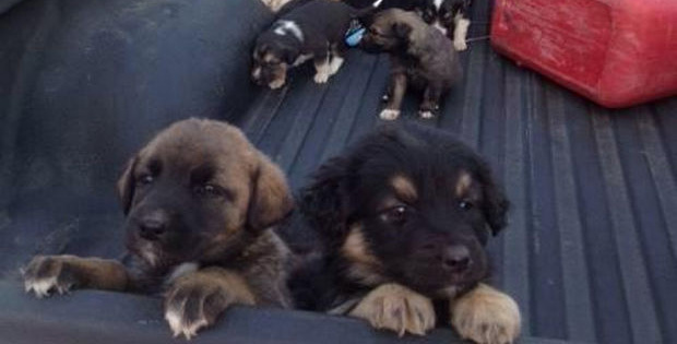 This Hunter Was Looking for a Place to Hunt but Instead He Found Abandoned Puppies. Lots and Lots of Adorable Puppies.