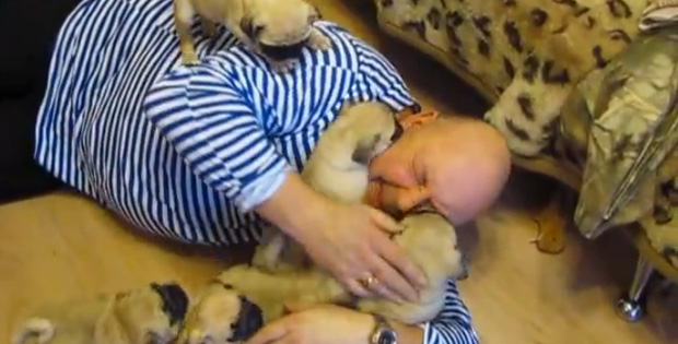 Russian Man Gets Attacked by a Grumble of Pug Puppies