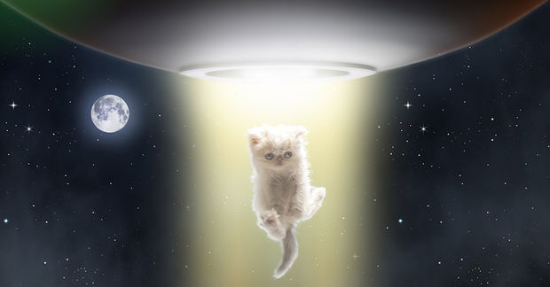 Aliens love cute little cats too.