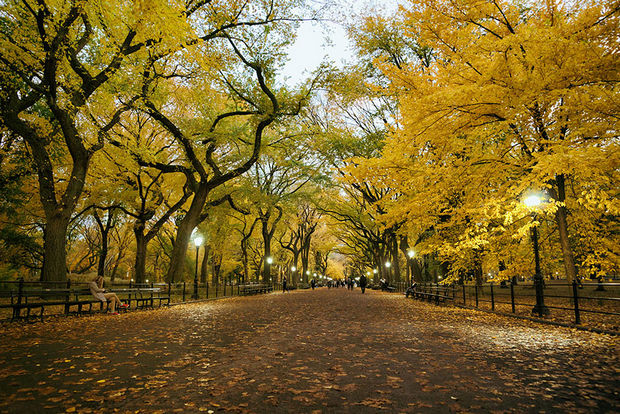 Fall colors at Poet's Walk, Central Park - New York, USA.