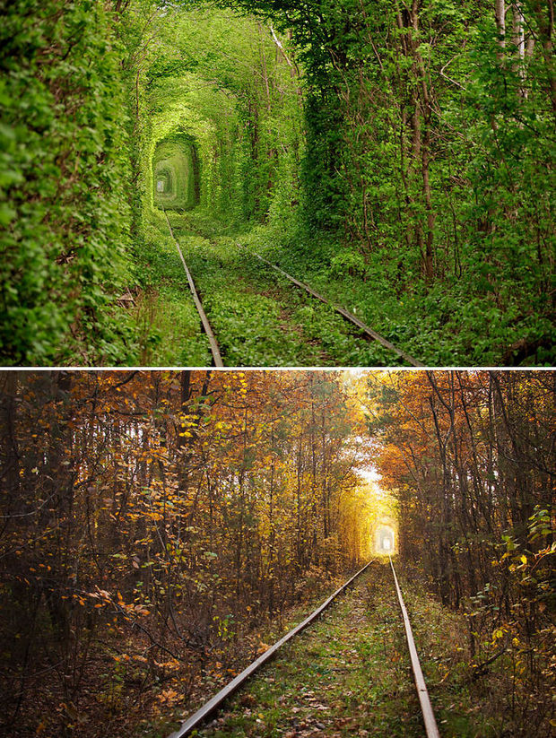 14 Fall Foliage Landscapes - Tunnel of Love - Ukraine.