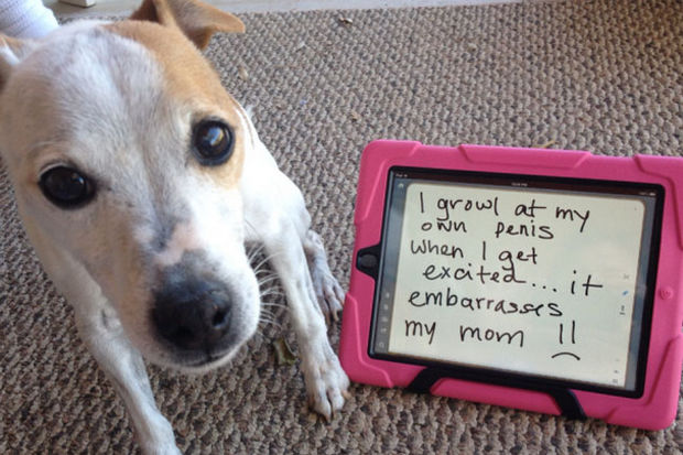 32 Hilarious Dog Shaming Photos - A great way to scare the neighbors.