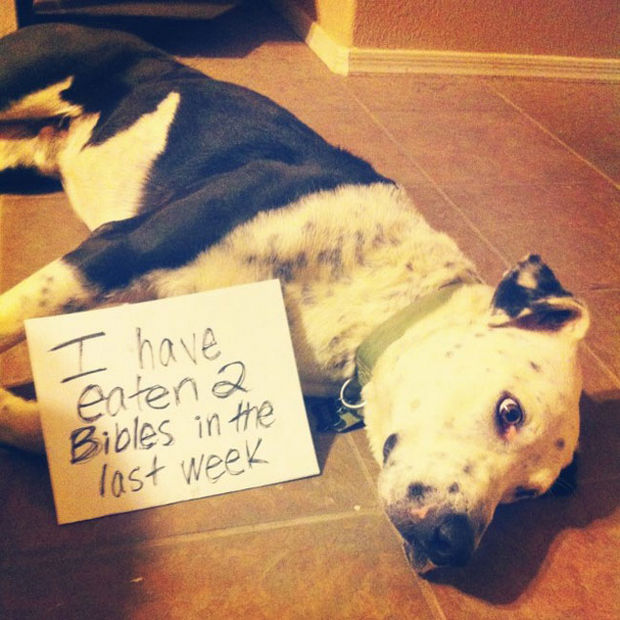 32 Hilarious Dog Shaming Photos - He is trying to cut down though.