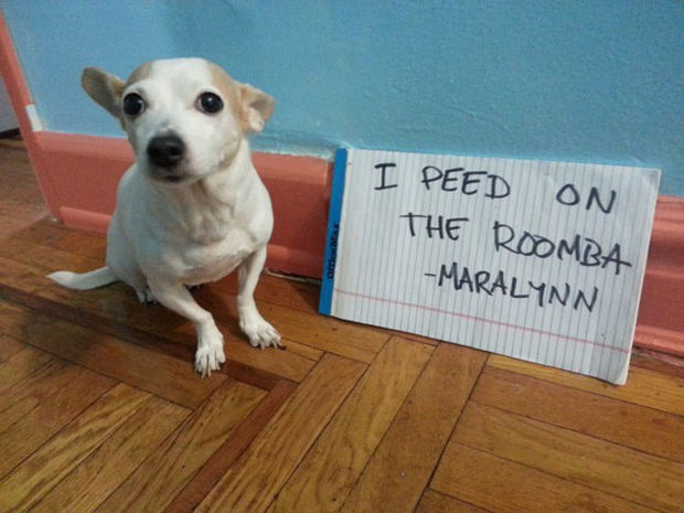32 Hilarious Dog Shaming Photos - I don't think it picks up liquid.