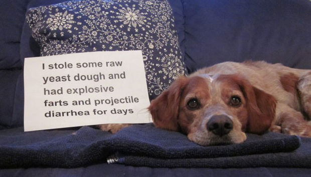 "32 Hilarious Dog Shaming Photos - Anything with the word ""projectile"" in it is usually bad."
