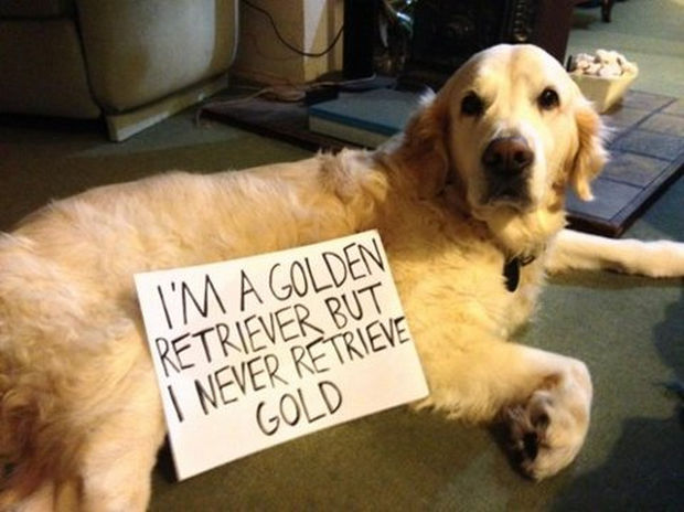 32 Hilarious Dog Shaming Photos - Maybe someday...