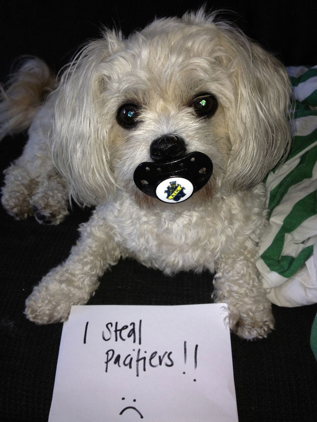 "32 Hilarious Dog Shaming Photos - ""Hey, it's what I do"""