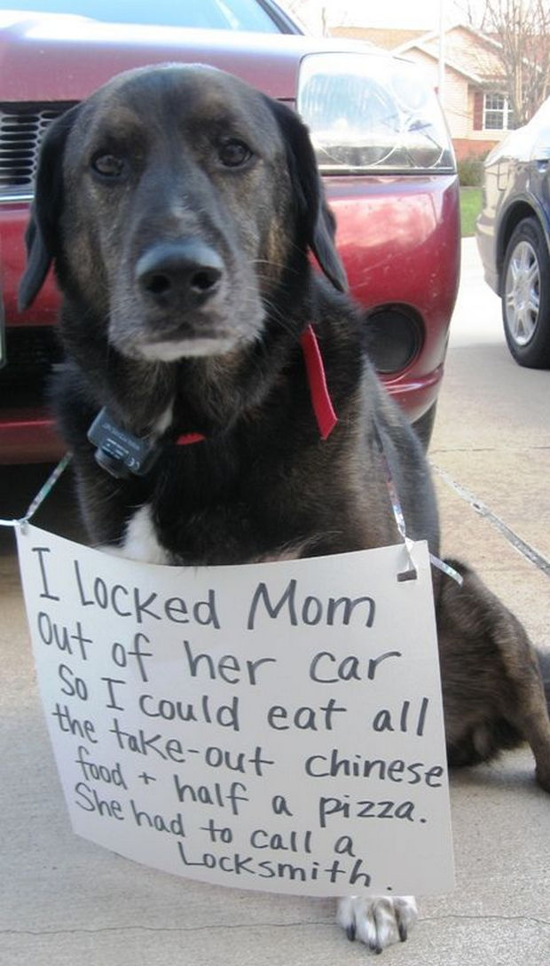 32 Hilarious Dog Shaming Photos - Chinese food and pizza? I would have done the same thing...smart doggy!