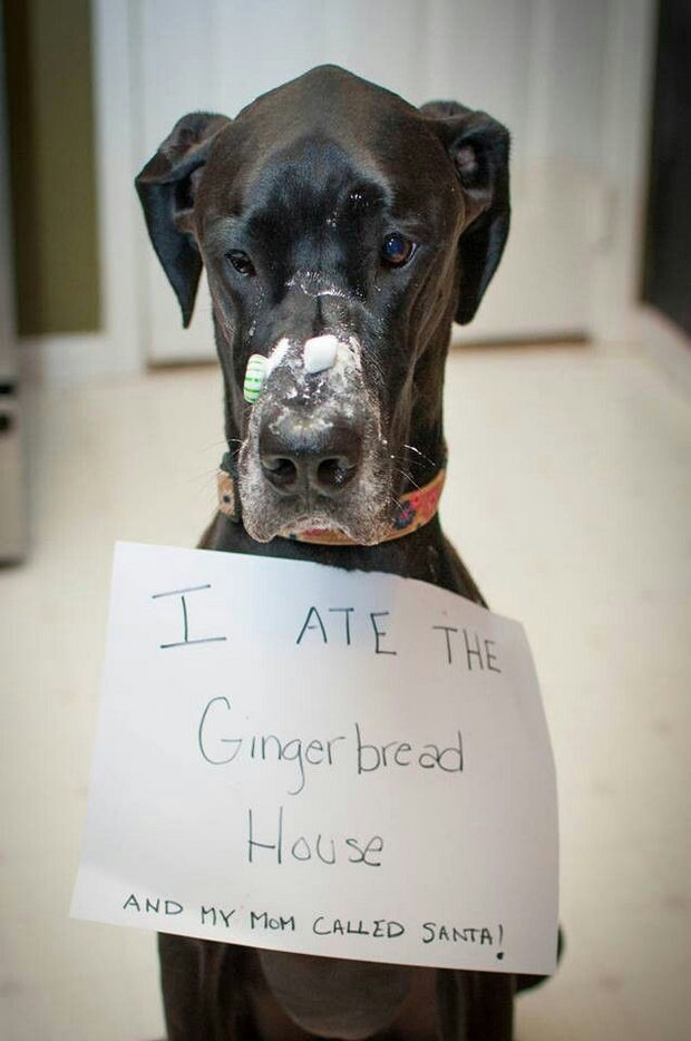 32 Hilarious Dog Shaming Photos - These Dogs Ate Everything You Can Think Of Let Shaming Begin 16