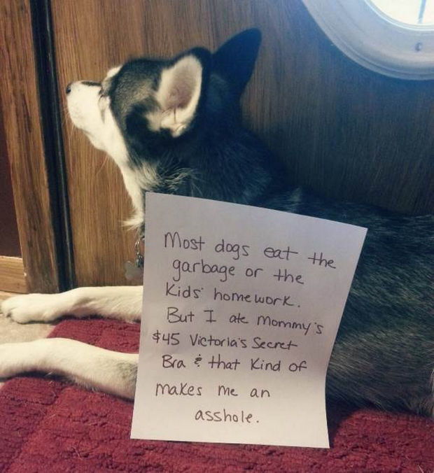 32 Hilarious Dog Shaming Photos - He has expensive tastes.