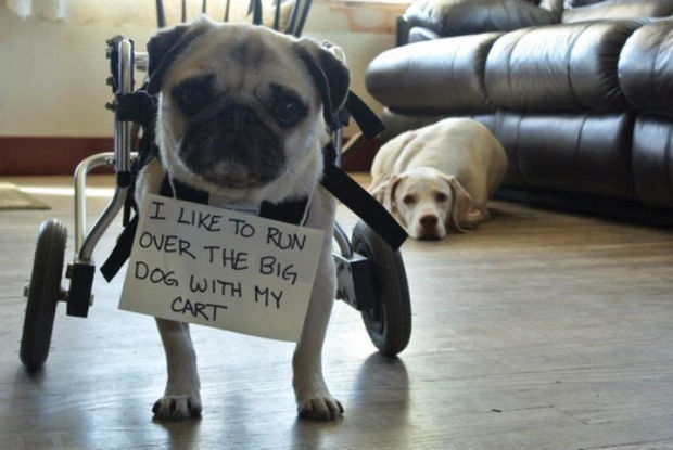 32 Hilarious Dog Shaming Photos - I'm sure he only means it sometimes.