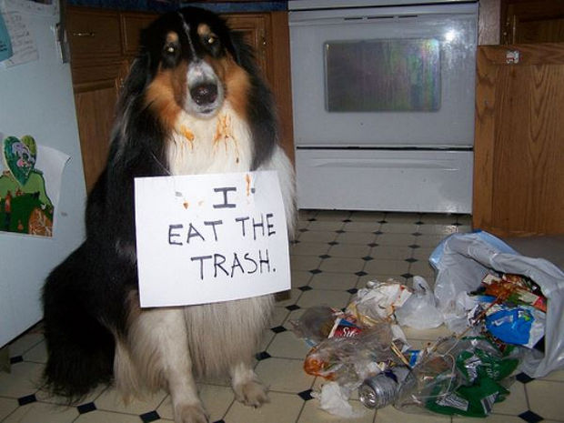 32 Hilarious Dog Shaming Photos - One person's trash is another dog's treasure.
