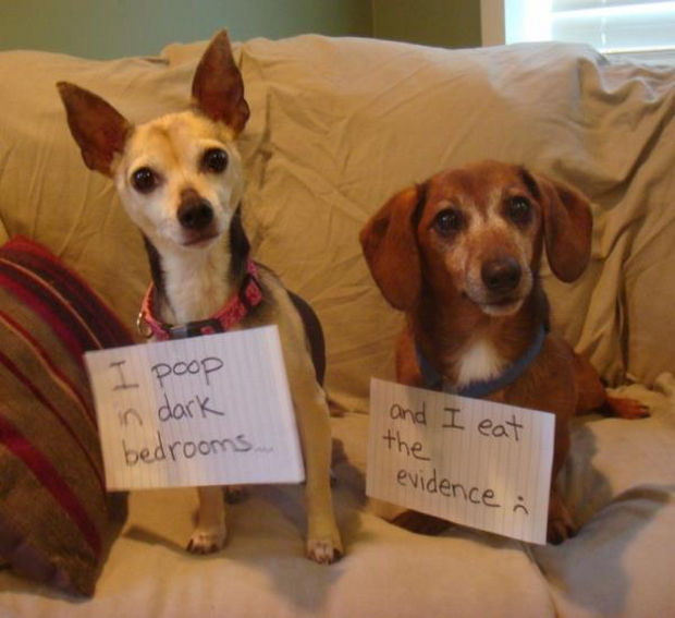 32 Hilarious Dog Shaming Photos - Too much information.