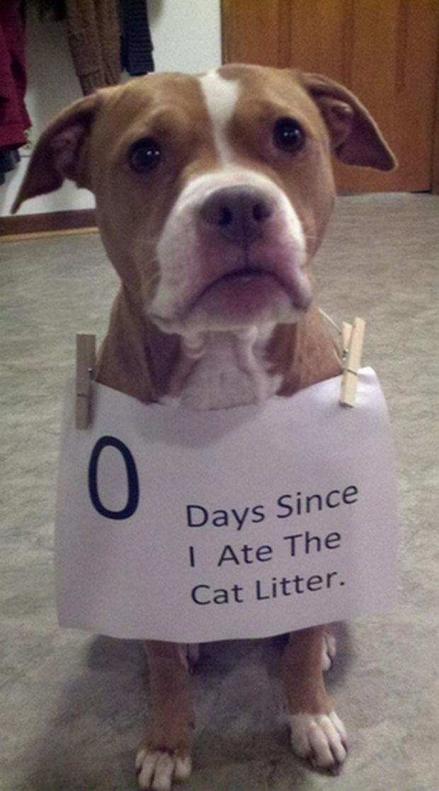 32 Hilarious Dog Shaming Photos - He's now on a 12-step program.
