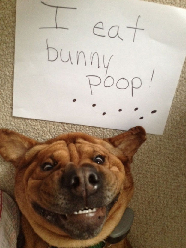 32 Hilarious Dog Shaming Photos - Look at that smile, he looks so proud!