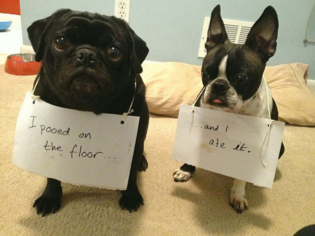 32 Hilarious Dog Shaming Photos - Again, too much information guys.