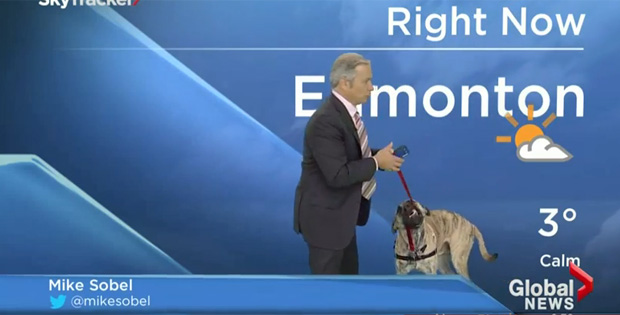 This Weatherman Gets a Handful with Dog on Live Forecast