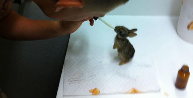 U.S Marine Found and Rescued Four Baby Rabbits