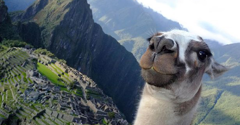 17 Animals That Prove They Can Selfie like the Best of Them.