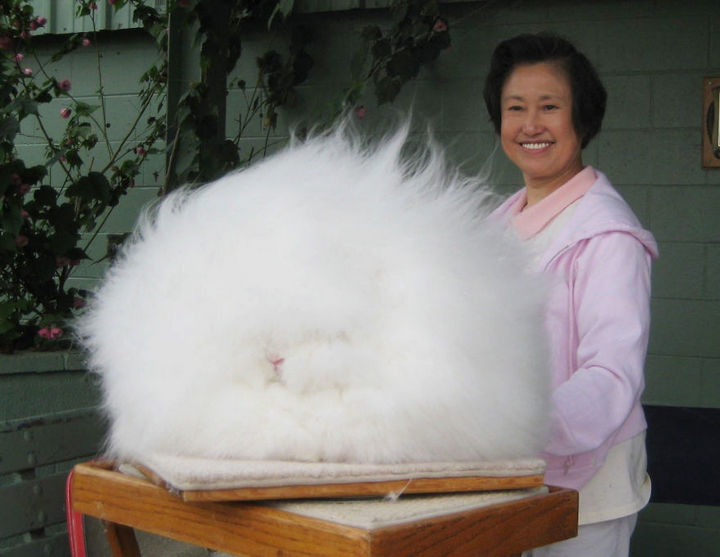 17 Animals That Have Luscious Hair - I swear there is an Angora rabbit in there somewhere.