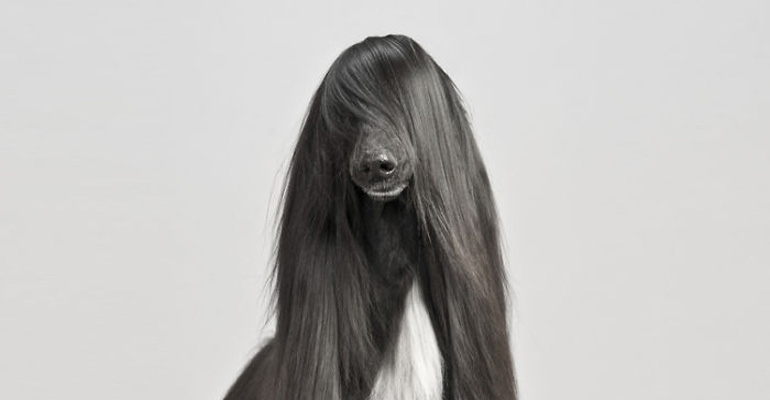 17 Animals with Long Hair and Gigantic Hairstyles.