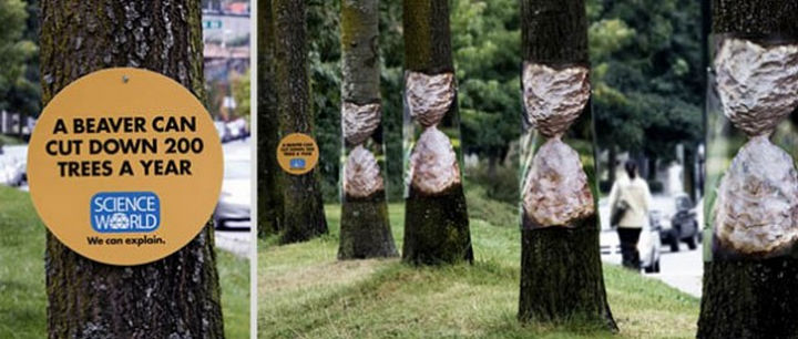 20 Billboards with Science Facts - A beaver can cut down 200 trees a year.
