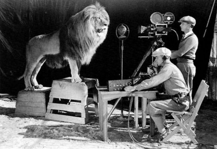 Cameramen recording the lion roar for the infamous MGM logo.